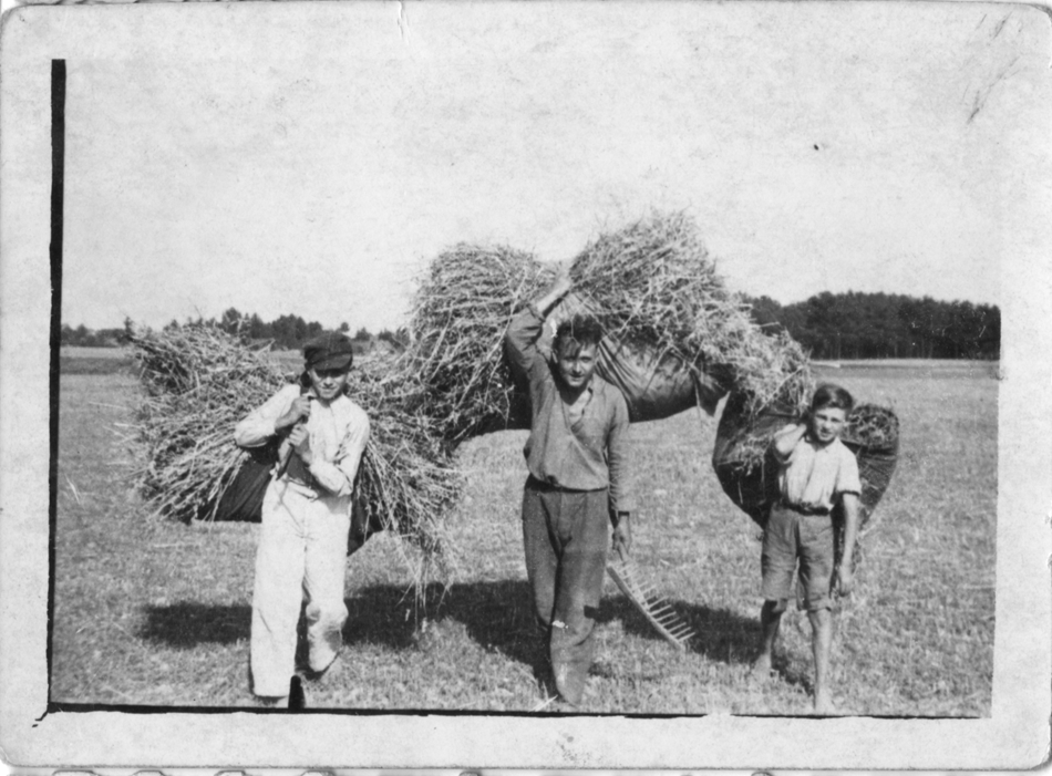 Polish boys gathering hay on German farm